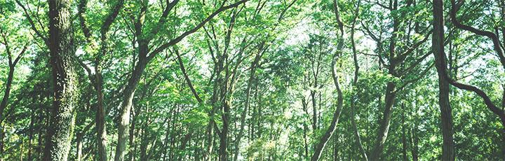知立市・高浜市で自然素材をふんだんに使用した注文住宅