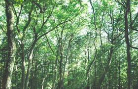 豊田市の自然素材の家(無垢の注文住宅)